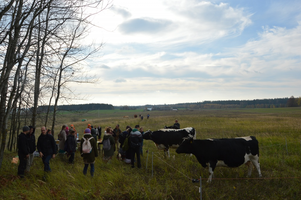 Karvučių ir jautukų globa