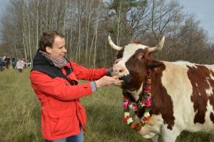 Karvių ir Jaučių globa